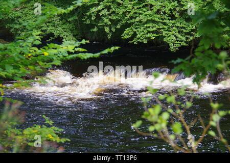 Rapids along River Dart Flowing Through Hembury Woods on a Late Summers Afternoon. Buckfastleigh, Dartmoor, Devon, UK. - Stock Photo