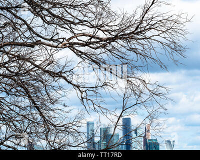 view from observation deck on Sparrow Hills (Vorobyovy Gory) - dried tree and skyscrapers of Moscow-city district under dark blue clouds - Stock Photo