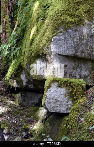 Photograph of a large boulders covered in thick green moss - Stock Photo