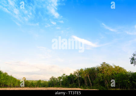 The beautiful garden in the park with green pastures green trees and blue sky. - Stock Photo
