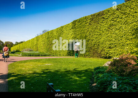 The Beech Hedge at the Royal Botanic Garden, Edinburgh, Scotland. - Stock Photo