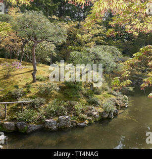 Japanese garden with a pond and backlit maple  and pine trees. - Stock Photo