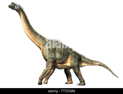 Brachiosaurus was a sauropod dinosaur, one of the largest and most popular. It lived in during the Late Jurassic Period. On a white background. - Stock Photo