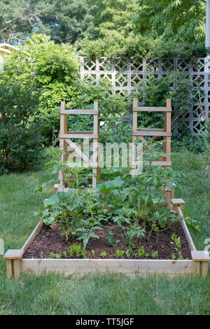 A thriving, outdoor, raised bed, vegetable garden contained by a wood frame with wood lattices for climbing plants - Stock Photo