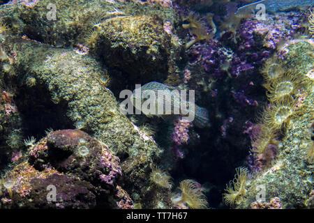 Fish in it's natural environment at Cretaquarium in Heraklion city, Crete Island - Greece - Stock Photo
