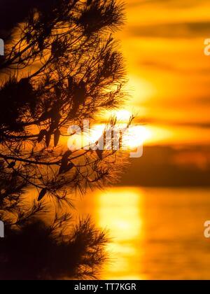 Sunset tree against setting sunset sun unsharp blurred low above sea horizon - Stock Photo