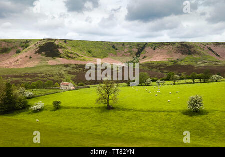 Derelict farmhouse deep in Hole of Horcum surrounded by farmland, trees, heather, and rolling landscape in late spring near Goathland, Yorkshire, UK. - Stock Photo
