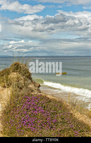 FINDHORN MORAY COAST SCOTLAND PURPLE FLOWERS OF BELL HEATHER ERICA CINEREA GROWING ON A SAND DUNE NEAR THE SEA ALSO A SPEEDBOAT AND WORLD WAR II SUBME - Stock Photo