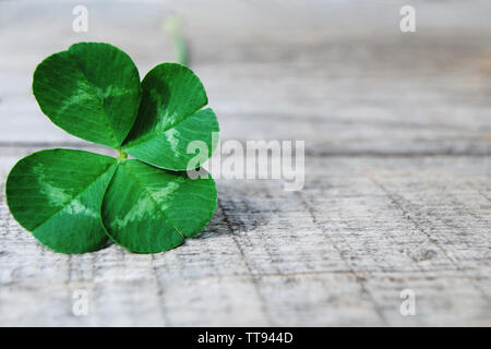 Real four-leaf clover on old gray wooden board background, close up - Stock Photo