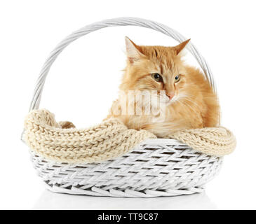 Red cat in wicker basket, isolated on white background - Stock Photo