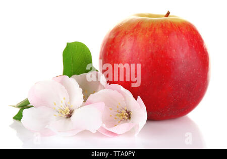Fresh apple with apple blossom, isolated on white - Stock Photo