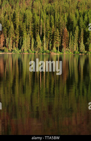 USA, Montana, Glacier National Park, Conifer forest reflects in Kintla Lake. - Stock Photo