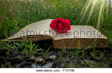 an old book on the grass, a rose as a sign of the book. affordable cover book cover, ilustration card. A magical world in a book. It's a magical world. - Stock Photo