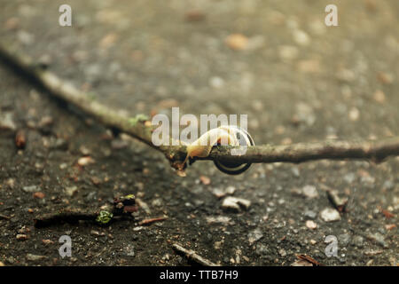Snail on wooden stick over ground - Stock Photo
