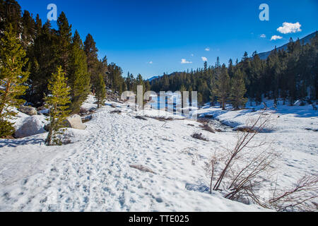 Rock creek running through the snow covered Little lakes valley bordered  by pine trees in the Eastern Sierra Nevada mountains of California, USA - Stock Photo