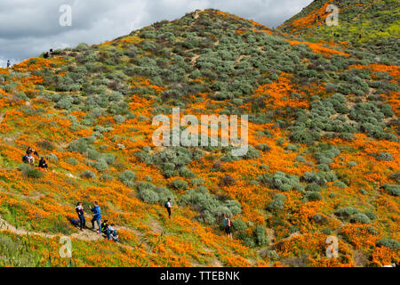 Lake Elsinore, CA / USA - March 9, 2019: Tourists from all over the world hike in the hills of Walker Canyon in order to enjoy the California poppies. - Stock Photo
