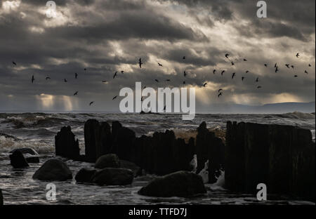 Flock of birds flying over sea against stormy clouds - Stock Photo
