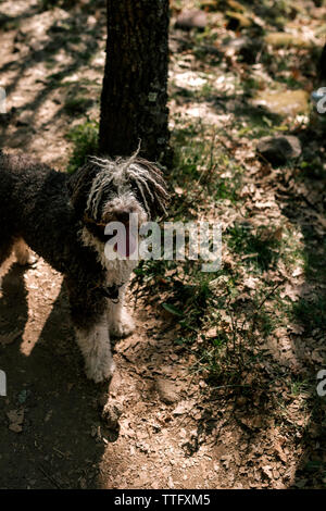Dog that is in the field - Stock Photo