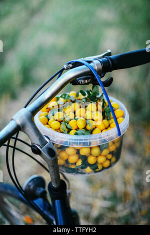 High angle view of greengages in basket hanging on bicycle handle - Stock Photo