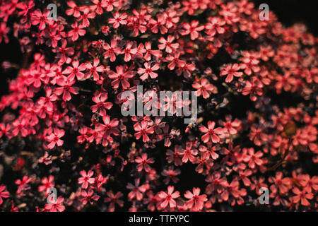 Little red flowers background - Stock Photo