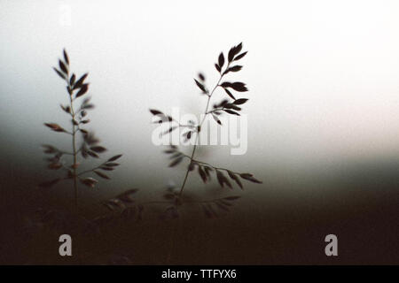 Dramatic spring plants close up - Stock Photo