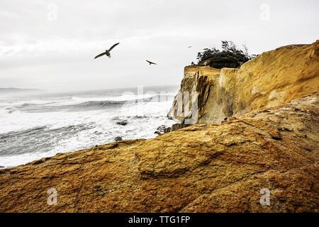 Birds flying over sea against cloudy sky - Stock Photo