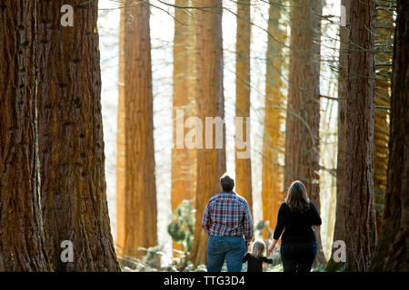 family of three looking up in awe of the forest
