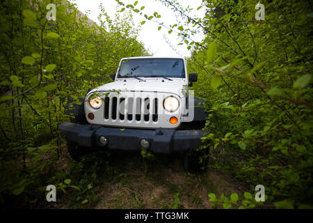 Jeep 4x4 on an overgrown road in the wilderness - Stock Photo