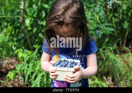 Young girl holds basket of fresh picked blueberries - Stock Photo