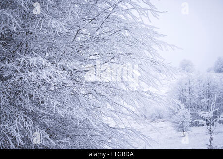 Snow covered trees against sky - Stock Photo