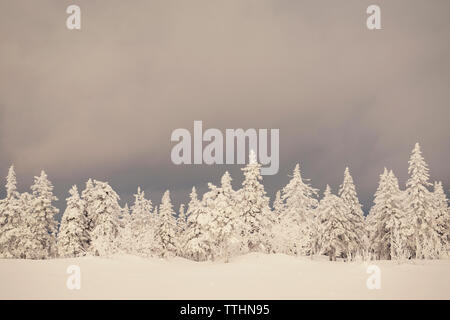 Trees on snow covered field against cloudy sky - Stock Photo