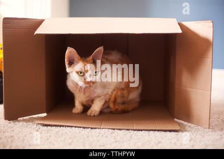 Cat sitting in cardboard box on rug at home - Stock Photo
