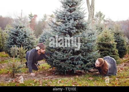 Couple selecting Christmas tree at pine tree farm - Stock Photo