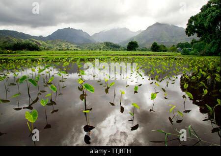 Plants growing in lake against mountains - Stock Photo