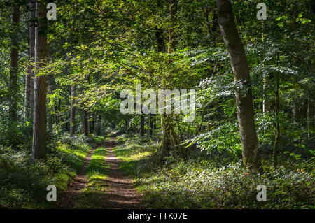 Beautiful Woodland Path In Wiltshire - Stock Photo