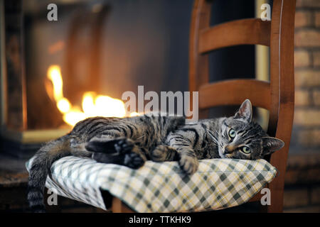 Portrait of tabby cat lying on chair against fireplace at home - Stock Photo