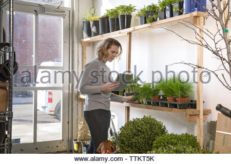Female entrepreneur with tablet computer examining plants while standing with dog in garden center - Stock Photo
