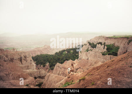 High angle view of mountain goat on rock against sky in foggy weather - Stock Photo