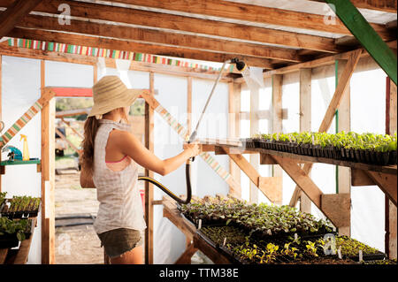 Side view of female farmer watering seedling trays in greenhouse - Stock Photo