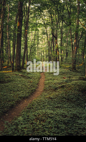 Pathway amidst trees in forest - Stock Photo