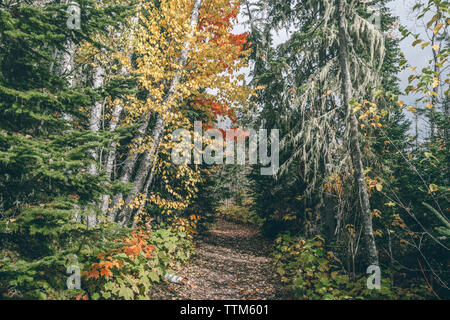Pathway amidst trees in forest on sunny day - Stock Photo