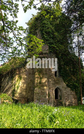 St Cohan Church in Merther, Cornwall, long abandoned and being reclaimed by nature - Stock Photo