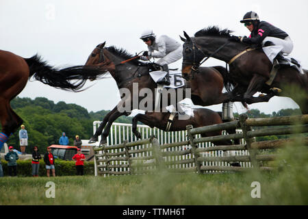 USA, Tennessee, Nashville, Iroquois Steeplechase, jockeys and their horses getting air over a jump during the Timber Race - Stock Photo
