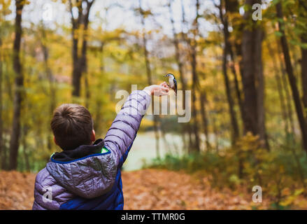 Rear view of boy feeding white breasted nuthatch in forest during autumn - Stock Photo