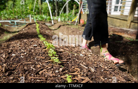 Low section of woman walking by seedlings in farm - Stock Photo