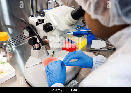 Scientist using microscope while examining samples in petri dish at laboratory - Stock Photo