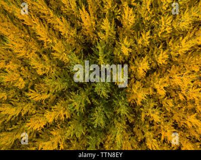 Full frame shot of autumn trees in forest - Stock Photo
