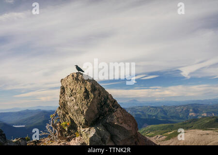 Bird perching on rock against cloudy sky - Stock Photo