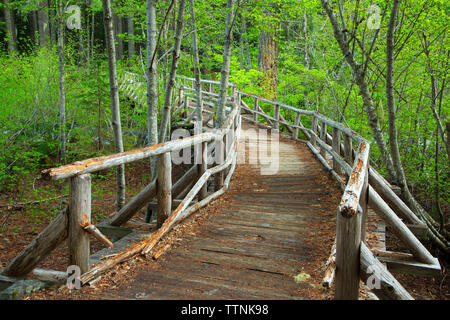 Hiker bridge over Salt Creek on Diamond Creek Falls Trail, Willamette National Forest, Oregon - Stock Photo
