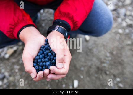 Cropped hands of boy holding blueberries - Stock Photo